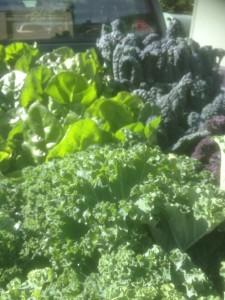 Farm fresh vegetables Anglesey